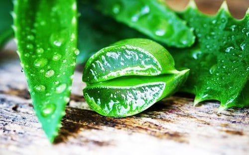 5 surprising reasons you need aloe vera