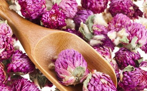Red Clover With a Wooden Spoon