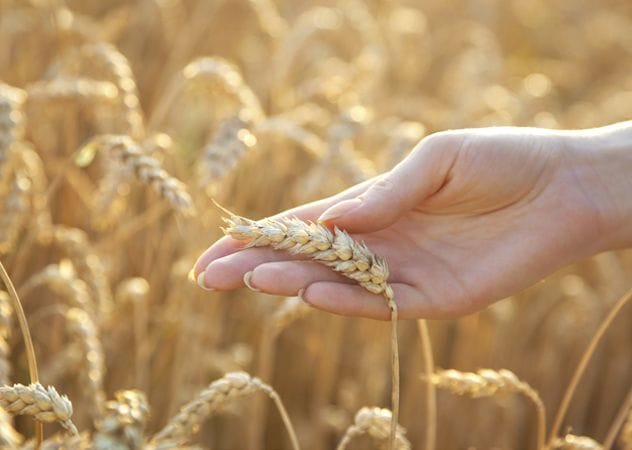 How to learn to live without wheat
