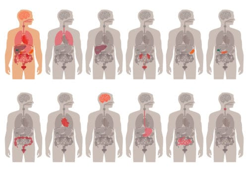 What happens to your organs when your immune system is damaged what happens to your organs when your immune system is damaged ccuart Image collections