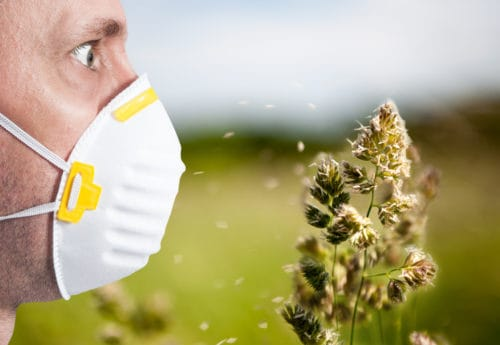 Here are the most common allergies