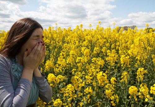 Female sneezing with hayfever in bright yellow seed field