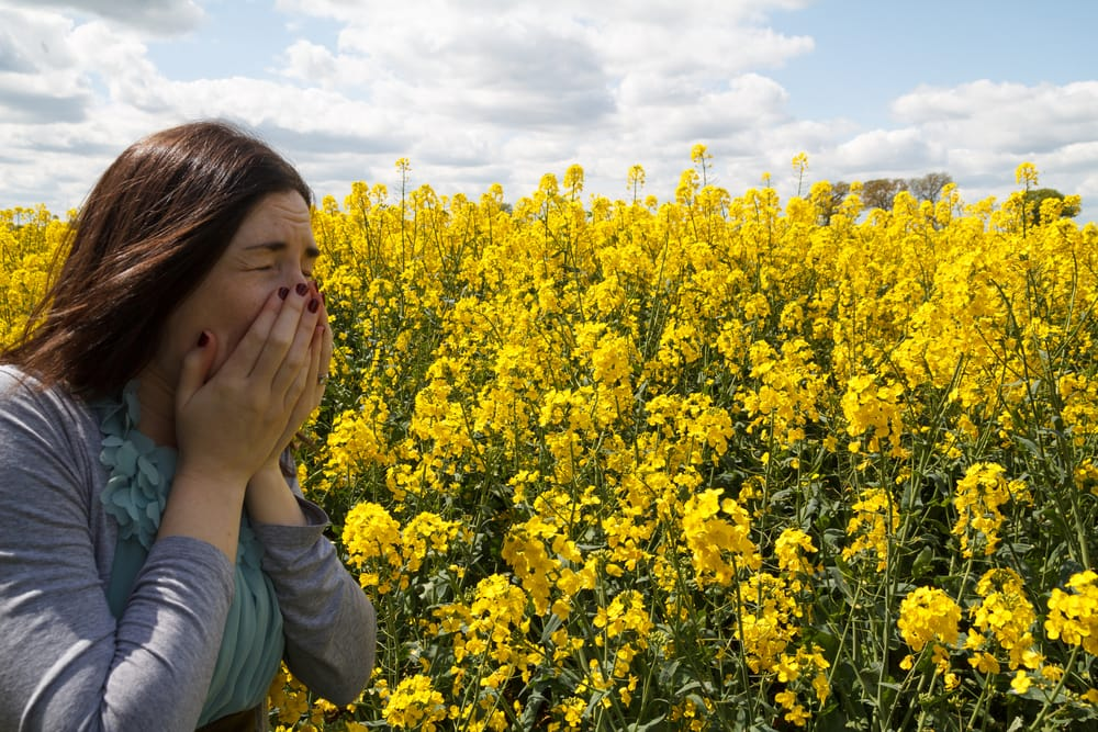 Foods that can ease your hay fever symptoms