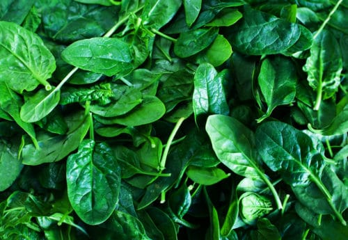 Vitamin-rich spinach and delicious recipe ideas