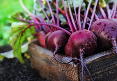 Fresh harvested beetroots in wooden crate