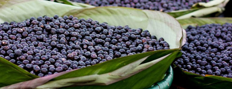 Why Maqui berries and Acai berries are the ultimate superfoods