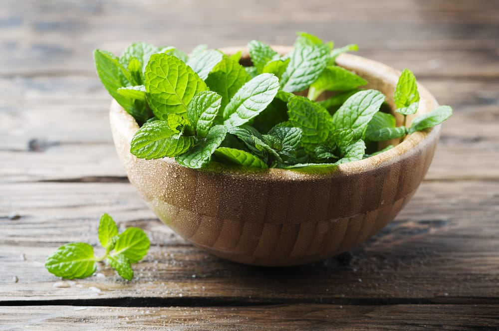 DIY aromatherapy: three ways with peppermint