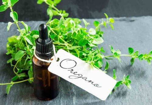 Discover the health benefits of oregano