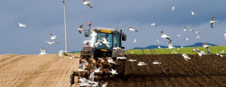 Declining nutrient levels in our soil