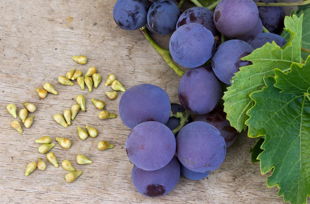 Reasons to be grape-ful