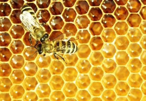 Discover the wonder of Manuka Honey