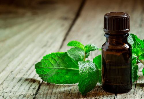 mint leaves next to a bottle of peppermint essential oil
