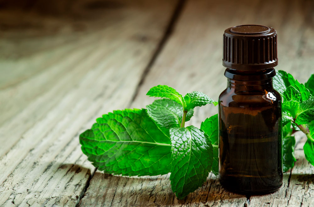 Peppermint oil: benefits, dosage, side-effects