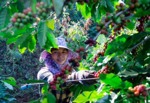 Is coffee sustainable?