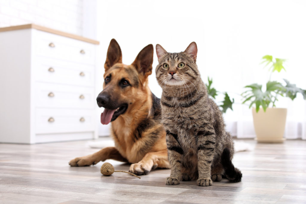 How to look after pets when 'social distancing' or staying at home