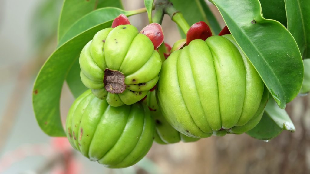 Garcinia cambogia: Overview, benefits, uses